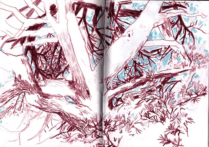 arbre-croquis