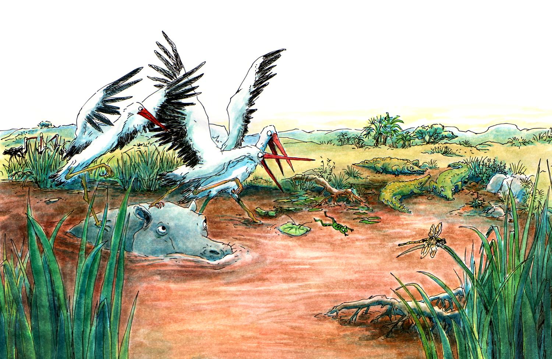 cigogne-afriques-pasassezamanger